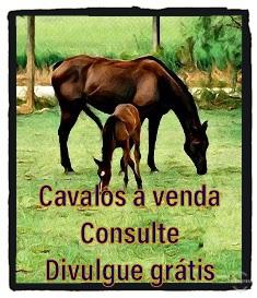 Cavalos a venda, consulte, divulgue grátis