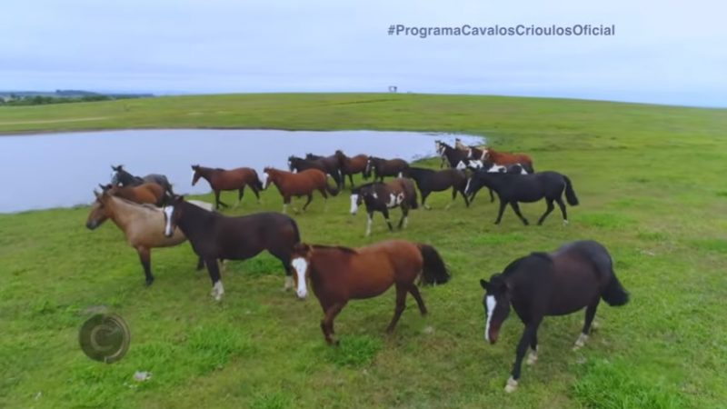 Programa Cavalos Crioulos de 23-06-2019