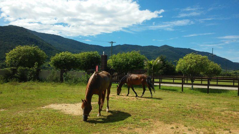 Diretrizes para controle de parasitas de cavalos atualizadas