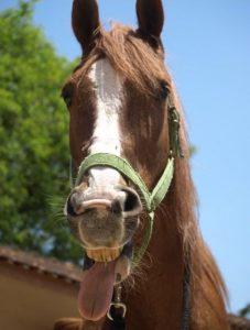 Novas pesquisas revelaram que os cavalos, de fato, tentam se comunicar intencionalmente conosco para atingir certos objetivos.