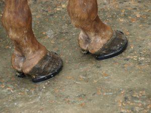 Cuidado de cascos para cavalos