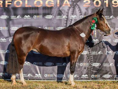 Capital Federal seleciona exemplares do Cavalo Crioulo para a Expointer