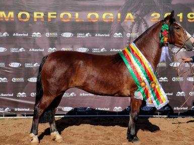 Chapecó apresenta seus classificados para a Morfologia na Expointer
