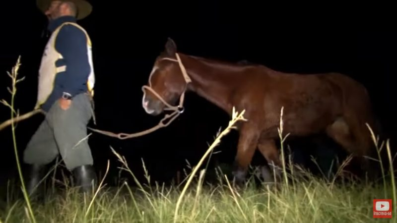 Programa Cavalo Crioulo Sem Fronteiras - 13-07-2019