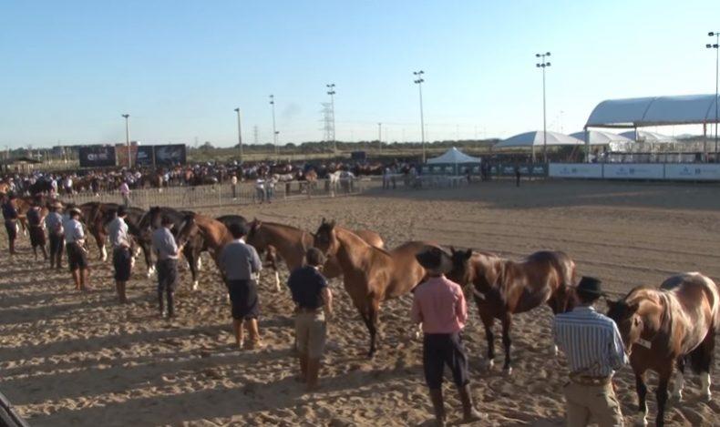 Programa Cavalo Crioulo sem Fronteiras do dia 20 de julho
