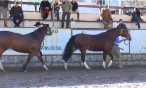 Programa Cavalo Crioulo sem Fronteiras do dia 27 de julho