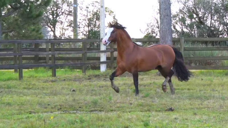 Programa Cavalos Crioulos de 07-07-2019