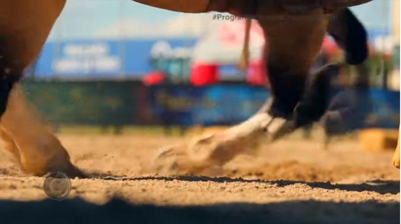 Programa Cavalos Crioulos de 21-07-2019