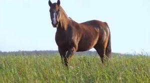 Programa Cavalos Crioulos de 28-07-2019