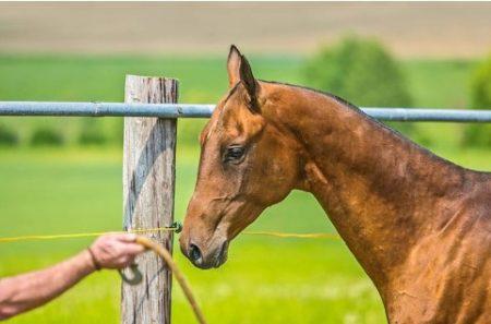 Quando os métodos de treinamento de cavalo cruzam a linha de aceito para abusivo