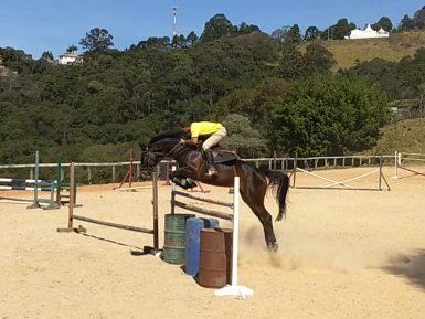Carthiane do Araucária, cavalos novos 5 anos expetacular, a venda