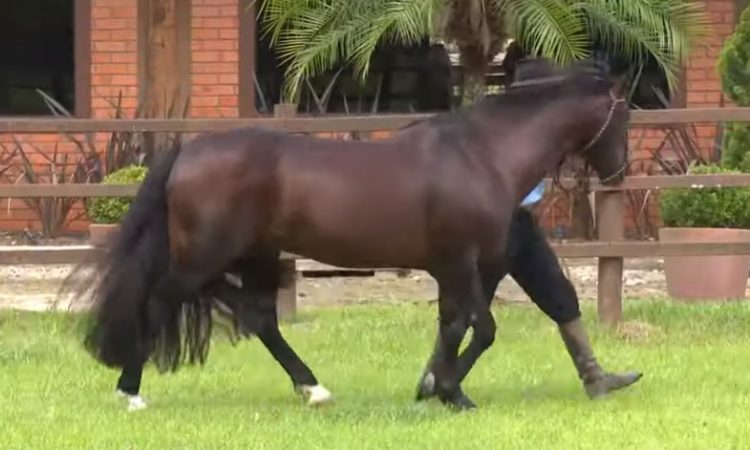 Cavalo Crioulo sem Fronteiras do dia 03 de agosto