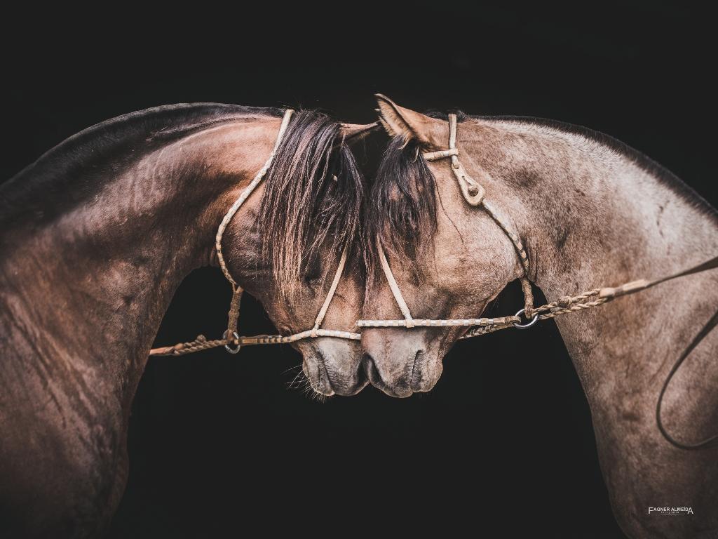 Fagner Almeida levará o Cavalo Crioulo para mostra no famoso museu parisiense no mês de outubro