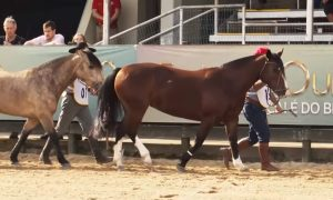 Programa Cavalo Crioulo sem Fronteiras do dia 17 de agosto