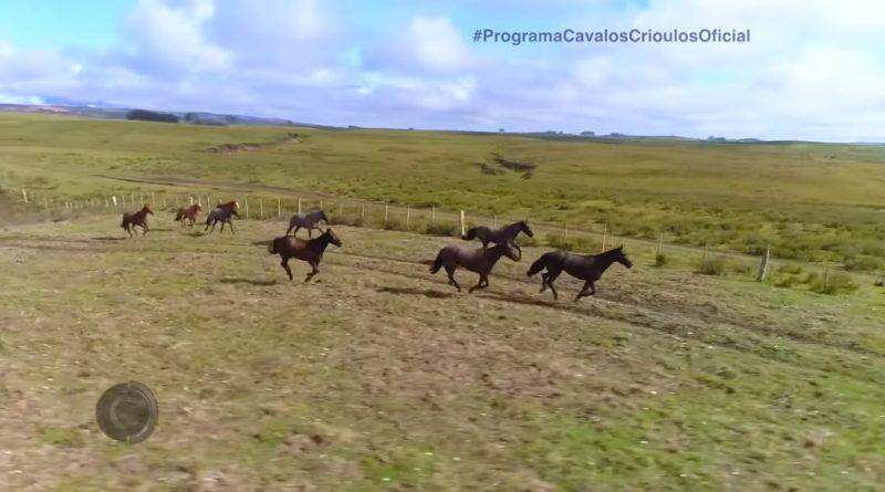 Programa Cavalos Crioulos 11 de agosto