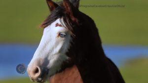Programa Cavalos Crioulos 25-28-2019