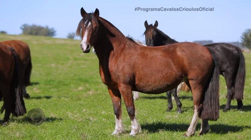Programa Cavalos Crioulos Oficial de 18-08-2019