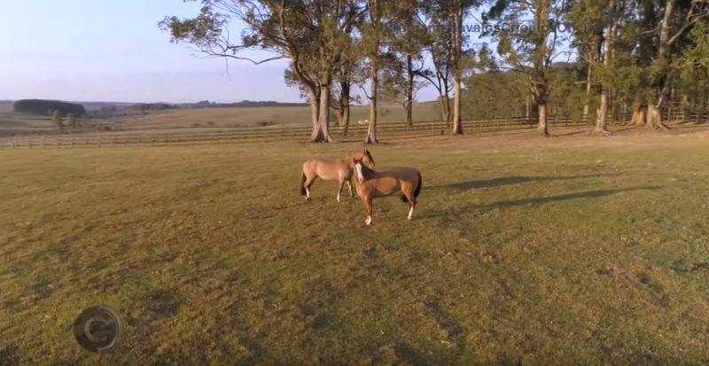 Programa Cavalos Crioulos de04-08-2019