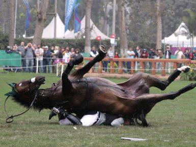 Pesquisador identifica falta de gerenciamento de riscos na indústria de cavalos