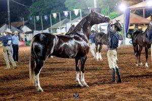 Diamante do Gadu foi eleito Grande Campeão Nacional Cavalo, foto Márcio Mitsuishi