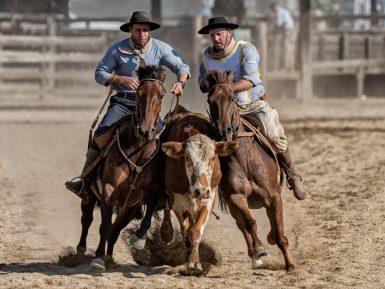 Final de Paleteadas do Cavalo Crioulo tem vitória inédita