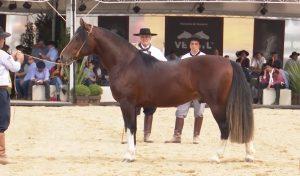 Programa Cavalo Crioulo sem Fronteiras do dia 14 de setembro