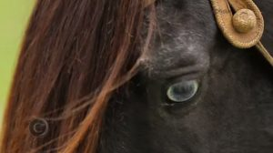 Programa Cavalos Crioulos Oficial de 15-09-2019
