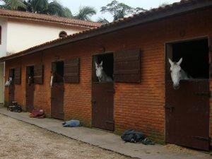 Cavalos em baias