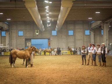 Freio da Europa apresentará potencial do Cavalo Crioulo em feira italiana