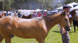 Programa Cavalos Crioulos Oficial de 20 de out