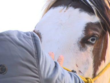 Programa Cavalos Crioulos de 29 de novembro