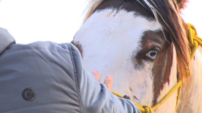 Programa Cavalos Crioulos 24 de novembro 2019