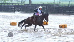 Programa Cavalos Crioulos 3-11-2019