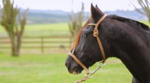 Programa Cavalos Crioulos Oficial de 17-11-2019