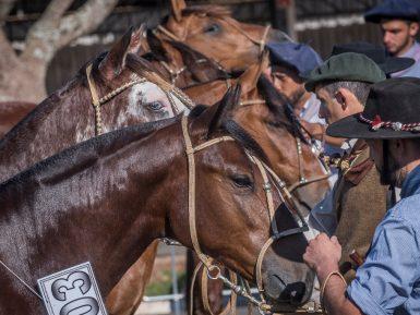 ABCCC acredita em retomada do mercado do Cavalo Crioulo em 2020
