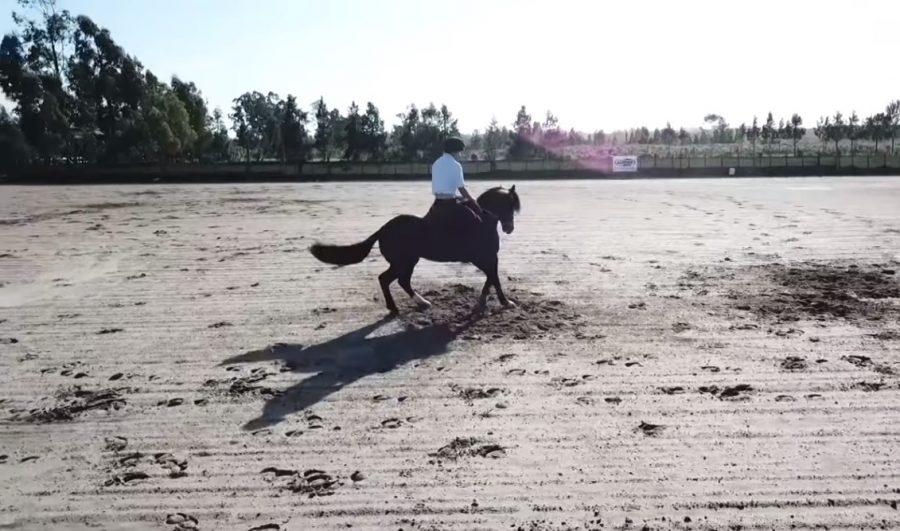 Programa Cavalo Crioulo sem Fronteiras do dia 07 de dezembro de 2019