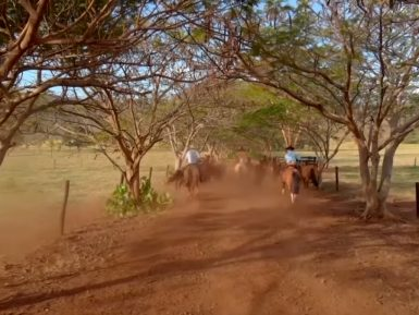 Programa Cavalo Crioulo sem Fronteiras do dia 14 de dezembro de 2019