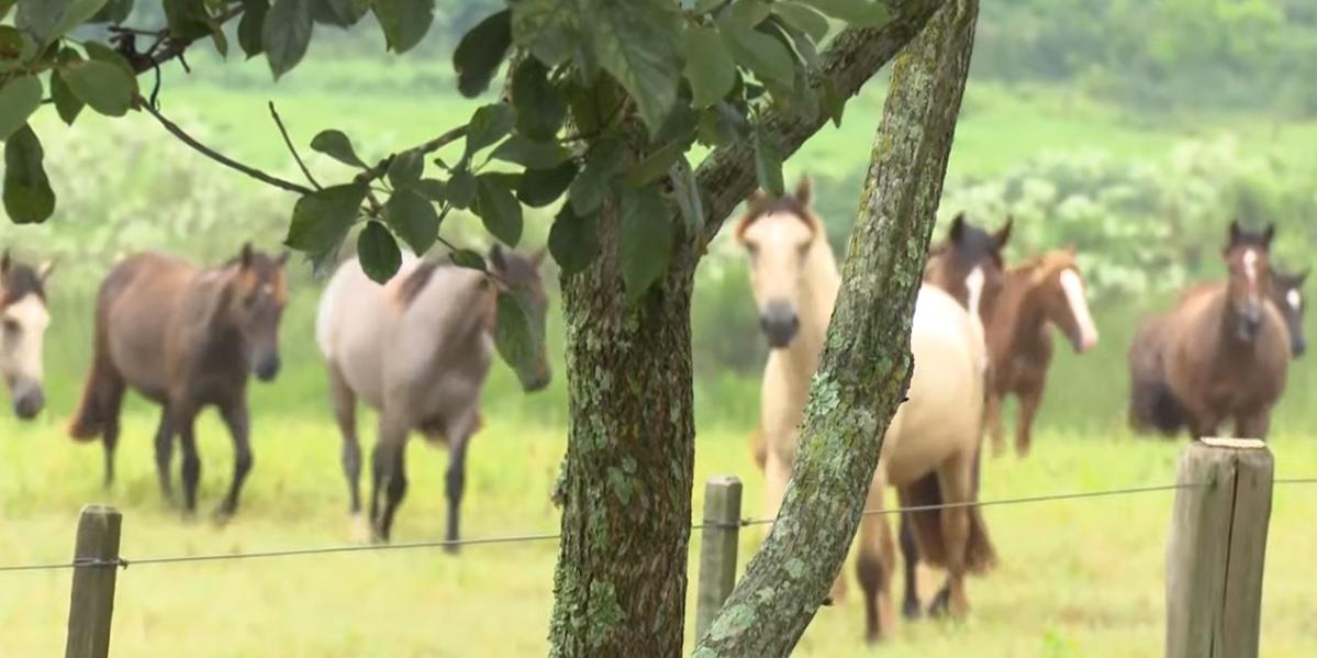 Programa Cavalo Crioulo sem Fronteiras do dia 30 de novembro de 2019