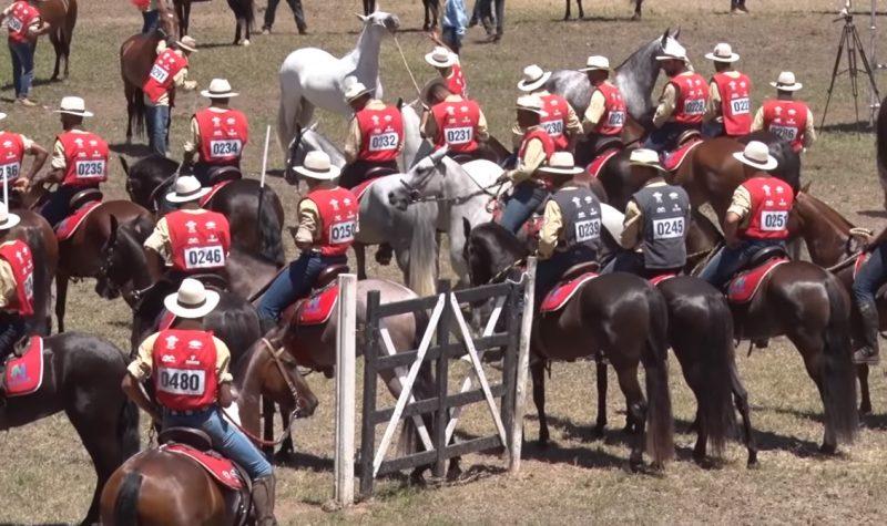 Programa Cavalo Mangalarga Marchador 9 de dezembro 2019