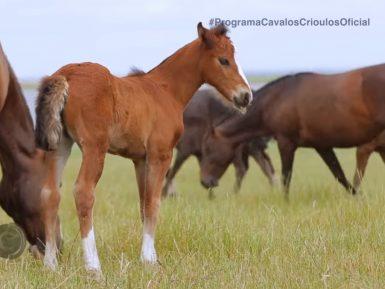 Programa Cavalos Crioulos de 15 de dezembro