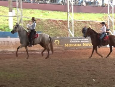 Programa Cavalo Mangalarga Marchador 531