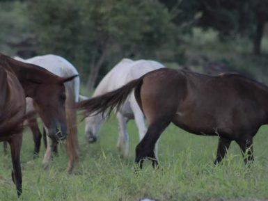 Programa Cavalo Mangalarga Marchador 533