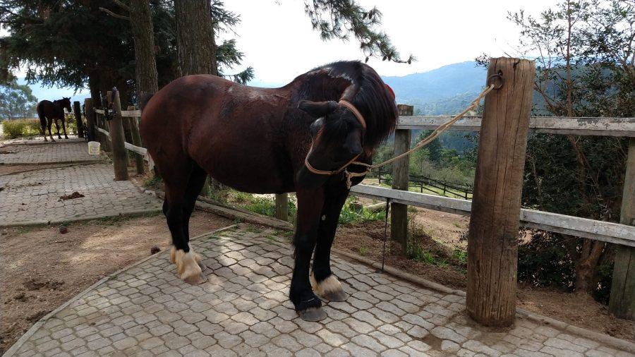 Como posso saber se meu cavalo está com dor?